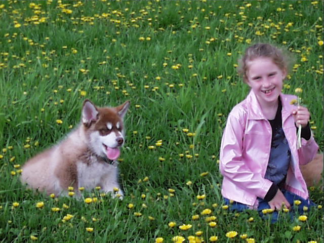 willow and alaskan malamute puppy