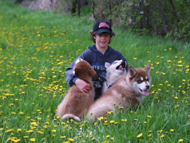 alaskan malamute puppies and kegan